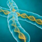 Introduzione ai principi della genetica