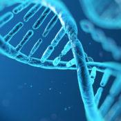 La struttura del DNA