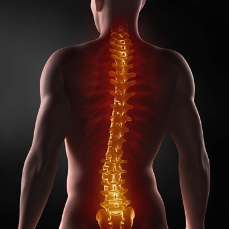 La colonna vertebrale: anatomia e funzioni